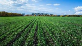 Jordbruks- fält i Europa royaltyfria bilder