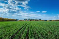 Jordbruks- fält i Europa arkivfoto