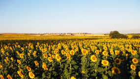 Jordbruks- fält i höst Royaltyfri Foto