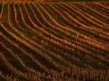 Jordbruks- fält med bakgrund för sidoljus Royaltyfri Fotografi
