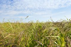 Jordbruks- fält med gräsplan Royaltyfri Foto