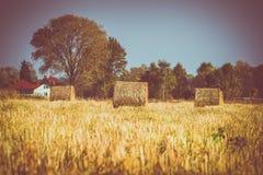 Jordbruks- fält med höstackar Arkivbilder