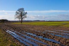 Jordbruks- fält med trädet Royaltyfri Bild