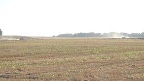 Jordbruks- fält och två sammanslutningar som arbetar råg för plockningvetekorn i avstånd 4K stock video