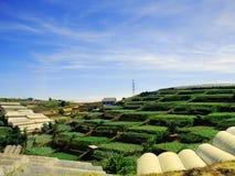 Jordbruks- fält på terrasserna i bergen Royaltyfri Foto