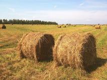 jordbruks- fält Runda baler av torkat hö i fältet mot den blåa himlen royaltyfri fotografi