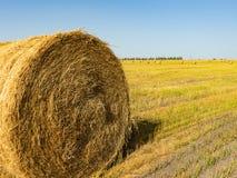 jordbruks- fält Rundapackar av torrt gräs i fältet mot den blåa himlen slut för bondehörulle upp royaltyfria foton