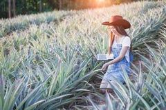 Jordbruks- forskare studerar tillväxten av ananas pl arkivfoto