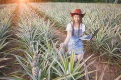 Jordbruks- forskare studerar tillväxten av ananas pl royaltyfri foto