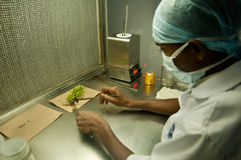 Jordbruks- forskning arkivfoto