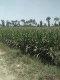 jordbruks- kantjusteringar royaltyfri foto