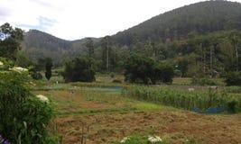 Jordbruks- länder i Ambegoda Royaltyfria Foton