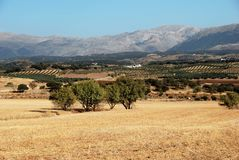 Jordbruks- land, Andalusia royaltyfri fotografi