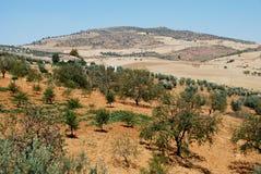 Jordbruks- land, Andalusia, Spanien. arkivfoton