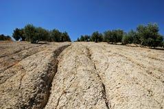 Jordbruks- land, Baeza, Spanien. arkivfoton