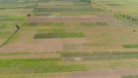 Jordbruks- land i indonesia lager videofilmer