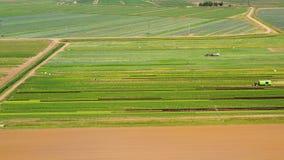 Jordbruks- land med gröna skördar från över lager videofilmer