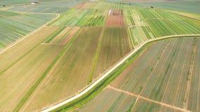 Jordbruks- land med gröna skördar från över stock video