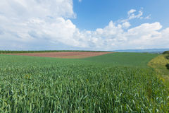 Jordbruks- landskap royaltyfri bild