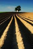 Jordbruks- landskap, fält, kapell, träd Royaltyfri Foto