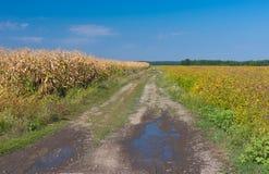 Jordbruks- landskap i säsong för sen sommar Arkivfoto