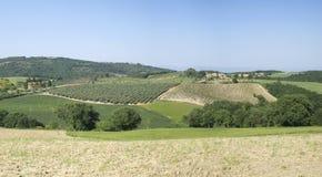 Jordbruks- landskap i Tuscany royaltyfri bild