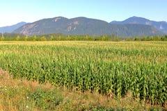 Jordbruks- landskap nära Abbotsford, F. KR., Kanada Fotografering för Bildbyråer