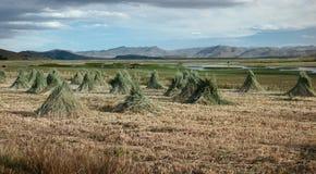 Jordbruks- landskap nära sjön Titicaca, Peru Arkivfoto