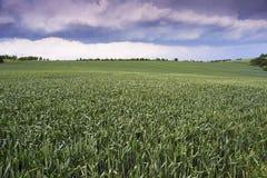jordbruks- liggande Arkivfoto