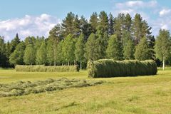 jordbruks- liggande royaltyfri foto