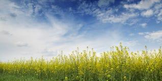 jordbruks- liggandepanorama Royaltyfria Foton