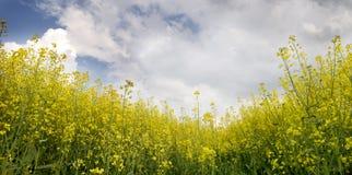 jordbruks- liggandepanorama Fotografering för Bildbyråer