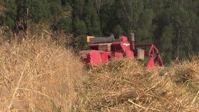 Jordbruks- skördetröska klippt moget vetekornfält arkivfilmer