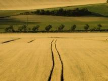 Jordbruks- som sparas med träd i geometriska former Arkivfoton
