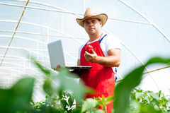 Jordbruks- tekniker som arbetar i växthuset arkivfoto