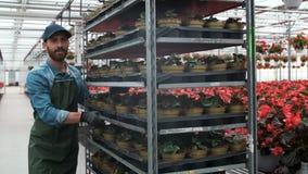 Jordbruks- teknikerWalks Through Industrial växthus med att bordlägga unga växter Jordbruk- eller vetenskapsbransch lager videofilmer
