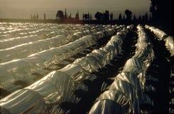 Jordbruks- växthus, Jordan Valley Jordan Arkivbild