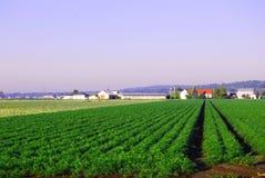 jordbruksmark fotografering för bildbyråer