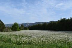Jordbruksmark för trädor för matta för Luberon Frankrike vårblommor Royaltyfri Bild