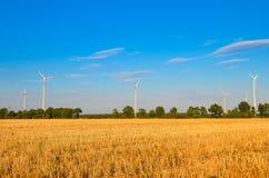 Jordbruksmark för vetefält royaltyfria foton