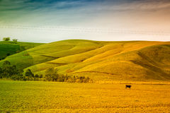 Jordbruksmark i Australien arkivfoton