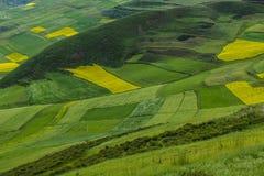 Jordbruksmark i backen Arkivbilder