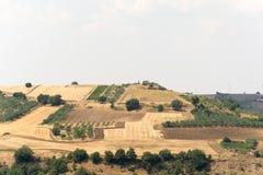 Jordbruksmark i Basilicata italy Royaltyfria Foton