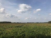 Jordbruksmark i Drenthe Fotografering för Bildbyråer