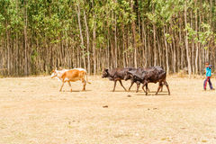 Jordbruksmark i Etiopien Royaltyfri Foto