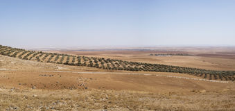 Jordbruksmark i Jordanien Royaltyfri Foto