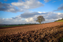 Jordbruksmark i vintern Nottinghamshire, UK Arkivfoto