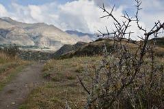 jordbruksmark nya panorama- breda zealand Royaltyfria Bilder