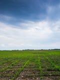 Jordbruksmark och blå sky Arkivfoto