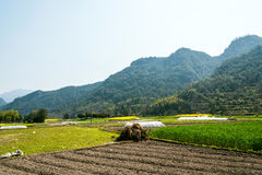 Jordbruksmark och kulle Arkivbilder